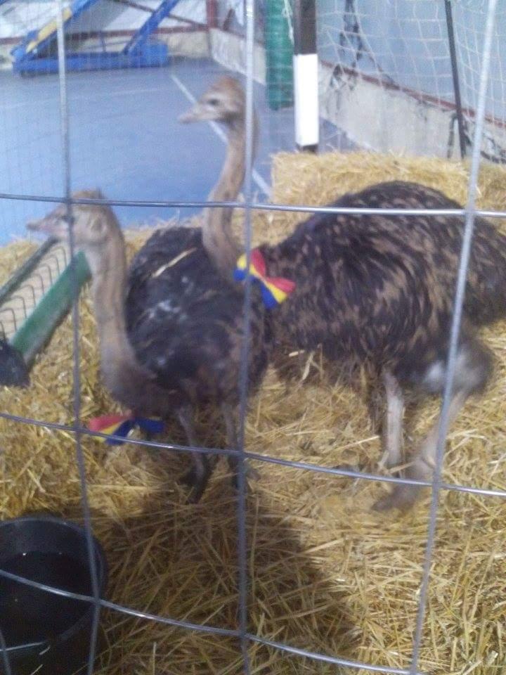 Expozitia de pasari si animale mici de la Lipova s-a bucurat de un real succes la public