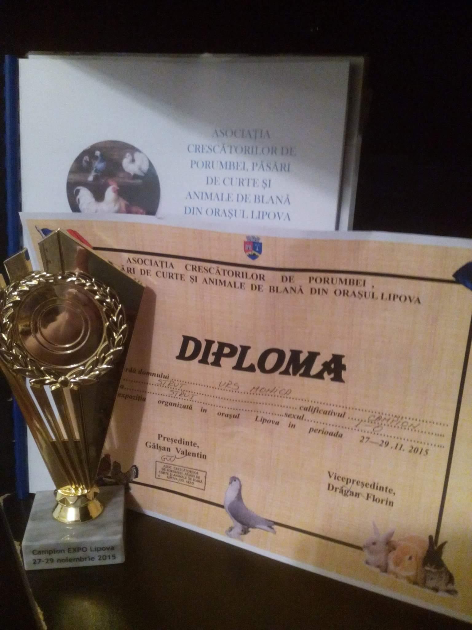 Participantii au primit fiecare, diplome si cupe