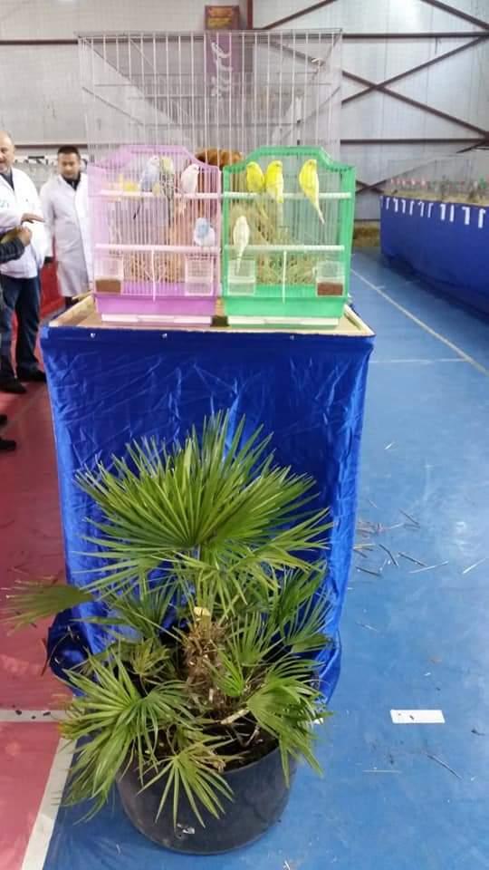 Asociația Crescătorilor de Porumbei, Păsări de curte și Animale de blană din Orașul Lipova a sărbătorit 10 ani de existență, printr-o  expoziție aniversară
